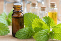 Melissa lemon balm essential oil with fresh melissa leaves Royalty Free Stock Photo