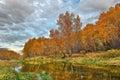 Mellow autumn on river bank Stock Image
