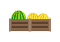 Melon Vector Illustration In Flat Style Design. Royalty Free Stock Photo