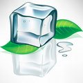 Melting ice cube with leaves Royalty Free Stock Photo