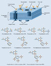 Membrane structure picture of cell with also phospholipides formulas Stock Image