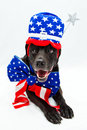 Memorial day dog Royalty Free Stock Images