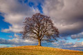 Memorial maple tree on the mystic place in Votice, Czech Republi Royalty Free Stock Photo