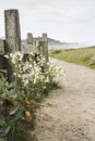 Mendocino california a walking path in Royalty Free Stock Image