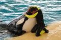 Mens en orka Stock Afbeelding
