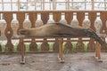 Mer lion resting sur un banc de parc Image stock