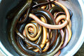 Mercado de la anguila Fotografía de archivo
