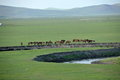 Mergel golden horde khan mongol tribes riverside grassland sheep horses cattle inner mongolia hulunbeier china s first qushui Stock Image