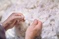 Merino Wool Royalty Free Stock Photo