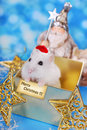 Merry christmas from hamster happy white with santa hat and greeting card sitting in gift box waiting for day Stock Photos
