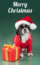 Merry Christmas - Santa Claus - dog Royalty Free Stock Photo