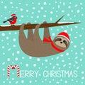 Merry Christmas. Sloth hanging on rowan rowanberry sorb berry tree branch. Bullfinch bird. Santa hat. Happy New Year. Cute cartoon Royalty Free Stock Photo