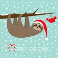 Merry Christmas. Sloth hanging on rowan rowanberry sorb berry tree branch. Santa hat. Happy New Year. Cute cartoon funny character Royalty Free Stock Photo