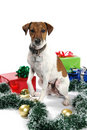 Merry doggy Christmas Stock Photography