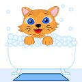 Merry kitten bathes in bath