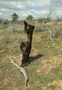 Mesa Verde Royalty Free Stock Photo