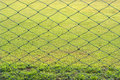 Meshes and grasses the background Stock Photo