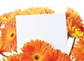 Message in the bouquet of gerber white sheet paper with a orange flowers on a white background Stock Images