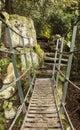 Metal bridge at biddulph grange in rockery staffordshire Royalty Free Stock Image