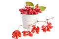 Metal bucket with barberries and branch with berries on white background Royalty Free Stock Photography