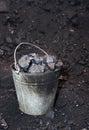 Metal bucket full of lumps of coal Royalty Free Stock Photo