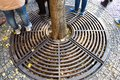 Metal grate on ground under a tree to drain water Royalty Free Stock Photo