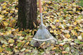 Metal rake for swiping leaves in autumn left outside by the tree Stock Photography