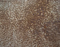 Metal sheet with rust stains Royalty Free Stock Photos