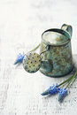 Metal Watering Can and Grape Hyacinths Royalty Free Stock Image