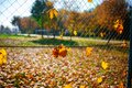 Metallic net-shaped fence from wire with autumn leaf stucked in it on a background of blur city Royalty Free Stock Photo