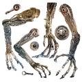 Metallic robot hand Royalty Free Stock Photo