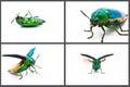 Metallic wood boring beetle set Royalty Free Stock Photo