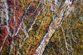 Metamorphic quartzite rock with pattern Stock Photo
