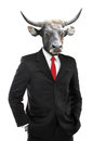 Metaphore of strong businessman concept with cow head isolated on white background Stock Images