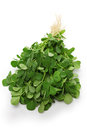Methi, fenugreek leaves Royalty Free Stock Photography
