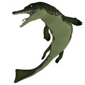Metriorhynchus on white was a marine reptile similar to our present day crocodile and lived in the jurassic period Royalty Free Stock Image