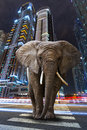 A metropolitan jungle with elephant walking on the road Stock Photo