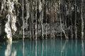 Mexican cenote, sinkhole Royalty Free Stock Photo