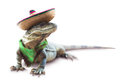 Mexican Iguana with hat and scarf Royalty Free Stock Photo