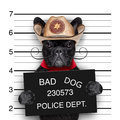 Mexican mugshot dog Royalty Free Stock Photo