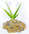 Mexican peso growth plant out of which a grows Stock Image