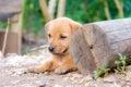 Mi perro Imagen de archivo libre de regalías