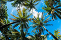 Miami beach fish eye view of beautiful palm trees in Stock Photos