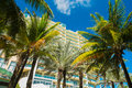 Miami beach palm trees and condos along ocean drive in Royalty Free Stock Photos