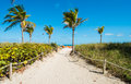 Miami beach pathway with palm trees to Royalty Free Stock Images