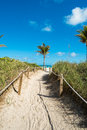 Miami beach pathway with palm trees to Royalty Free Stock Photo