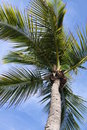 Miami Palm Tree Royalty Free Stock Images