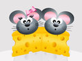 Mice in love on the slice of cheese Stock Photos