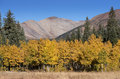 Michigan Creek Campground in Colorado with the changing of seasons. Royalty Free Stock Photo