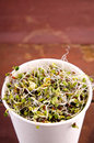 Microgreens assortment in paper cup. Healthy Green Salad with fresh raw sprouts